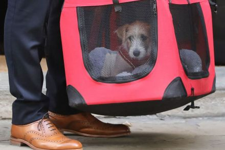 Boris Johnson's new rescue puppy arrives in Downing Street