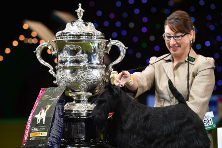 BT_20150311_CRUFTS11_1554997.jpg