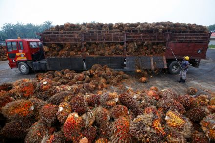 38629537 - 07_06_2016 - PALMOIL-SUSTAINABLE_.jpg