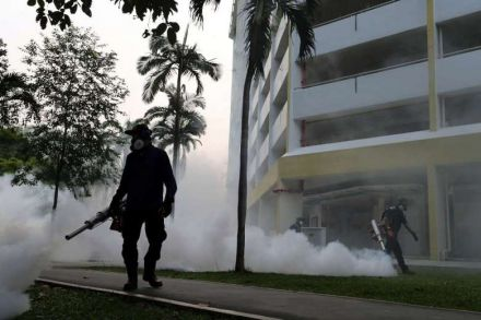 Locally transmitted Zika virus infects 41 in Singapore