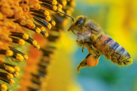 38973280.1 (38974051) - 05_07_2016 - GERMANY-WEATHER-BEE-FEATURE.jpg