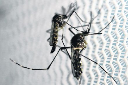 28-39695897 - 31_08_2016 - HEALTH-ZIKA_WHO.jpg