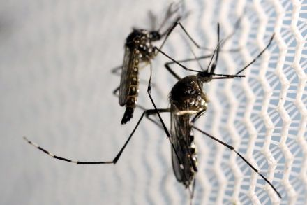39255607.2 (39738938) - 04_09_2016 - HEALTH-ZIKA_FLORIDA.jpg