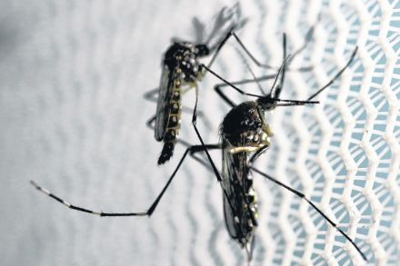 27-39695897 - 31_08_2016 - HEALTH-ZIKA_WHO.jpg