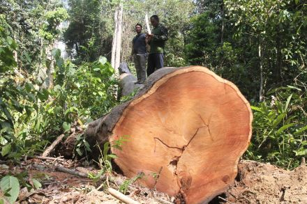 39861696 - 15_09_2016 - FILES-INDONESIA-ENVIRONMENT-FORESTRY.jpg