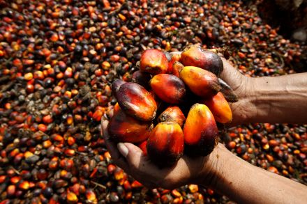 Indonesia 2017 palm oil output seen rising up to 16 pct -industry