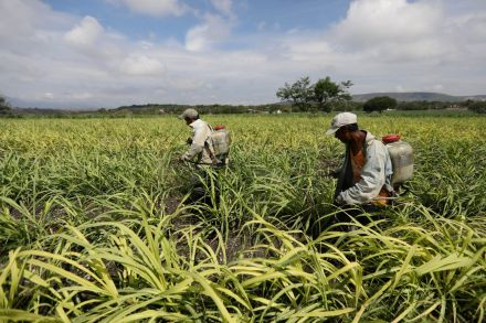US commerce chief extends deadline in Mexico sugar trade talks