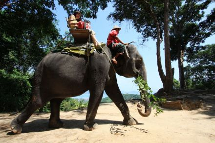 Asia Tourism Industry Keeps Elephants in Cruel Conditions, Rights Body Says