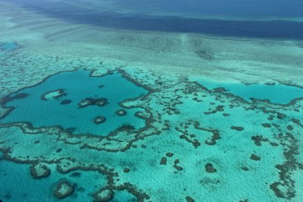 Image result for Scientists discover resilient 'heart' of Great Barrier Reef