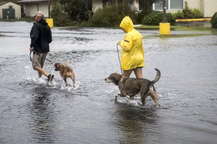 Texas man rescues 6 dogs during Hurricane Florence rescue missions