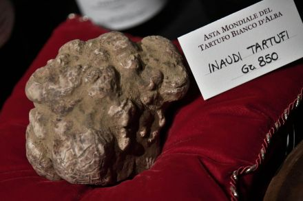 BP_white truffle_121118_10.jpg