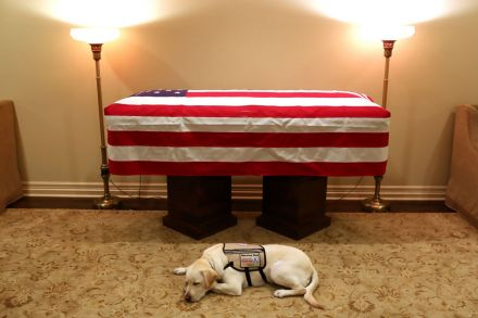 Photo of George HW Bush's service dog mourning at his casket pulls the internet's heartstrings