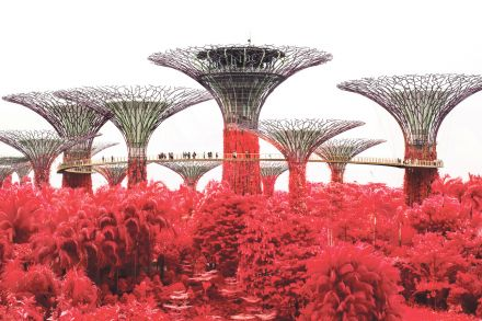 BT20200417_Design_Supertrees_at_Gardens_by_the_Bay.jpg