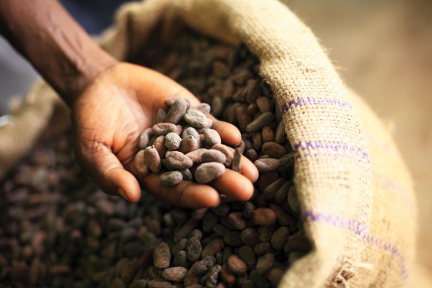 malaysias chocolate market to 2014 essay Malaysian cuisine consists of there are different types of locally grown and imported rice available in the market  a malted chocolate drink.