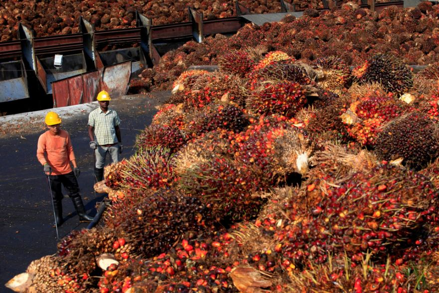 ioi group five forces palm oil Greenpeace activists shined a spotlight on malaysian palm oil giant ioi group and its ties to forest destruction and how palm oil companies like ioi have set.