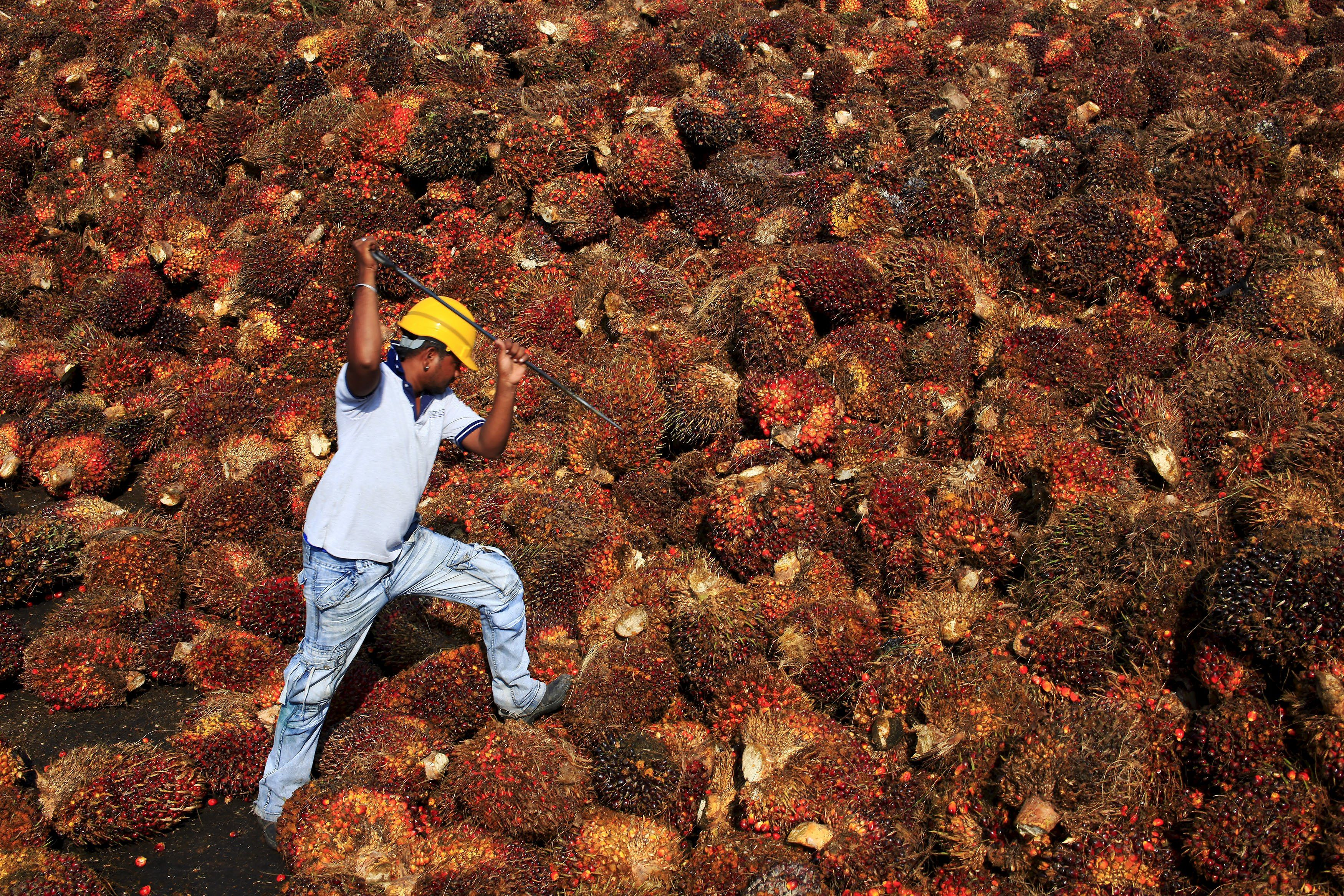 Malaysia keeps March crude palm oil export tax unchanged at