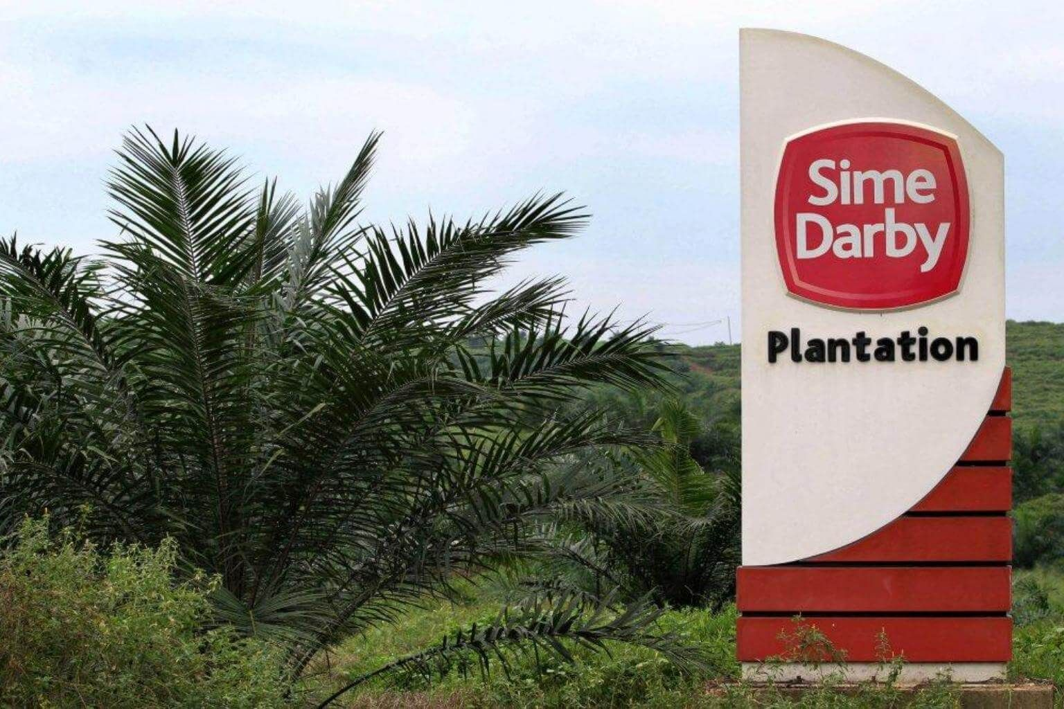 Image result for sime darby plantation