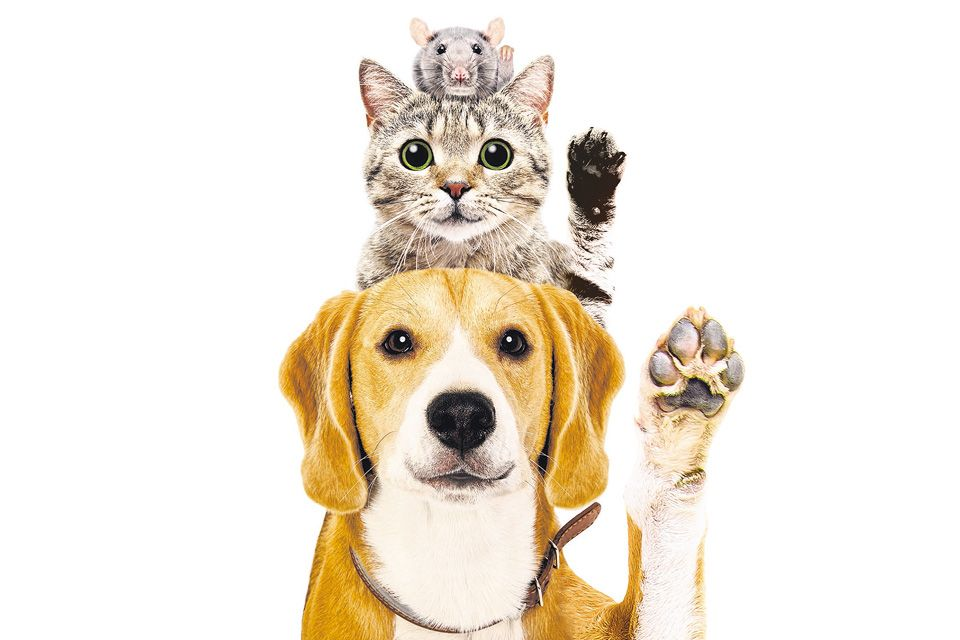 Paws Perous Business The Booming Pets Trade That S Also Feeding An Illicit Market Brunch The Business Times